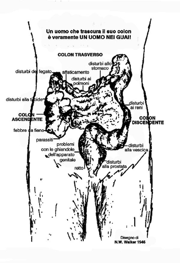 colon e terminazioni nervose